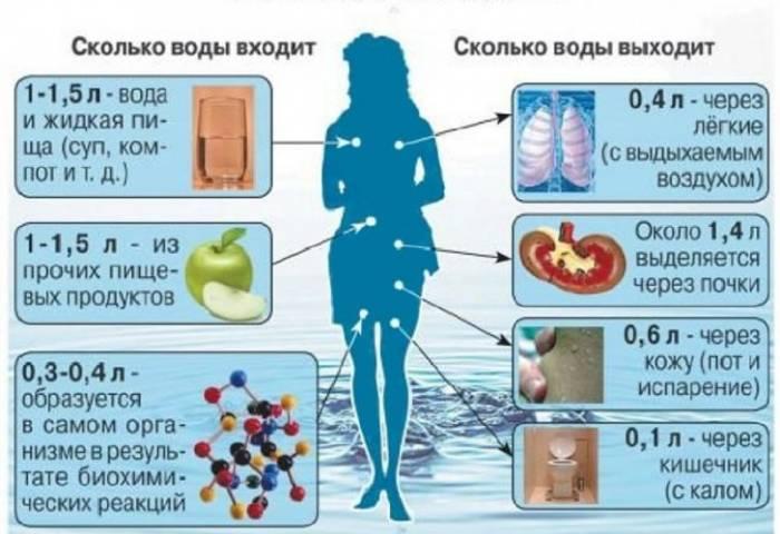 Как происходит обезвоживание организма