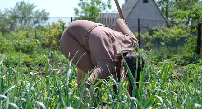 Профилактика проблем со спиной при работе в саду и во дворе