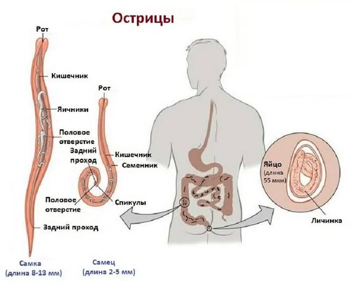 Симптомы заражения организма человека паразитами