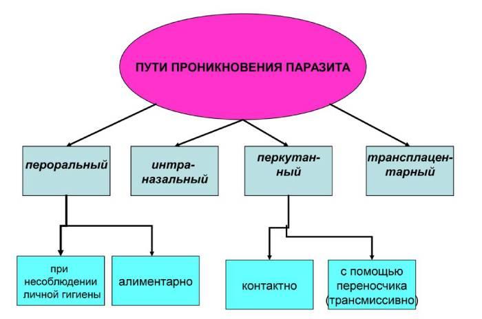 Симптомы глистов в организме человека и средства для очищения кишечника