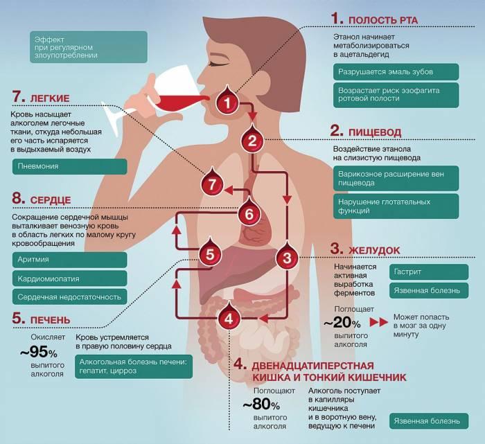 Как алкоголь влияет на ваше тело
