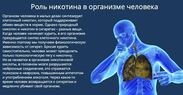 Роль никотина в организме