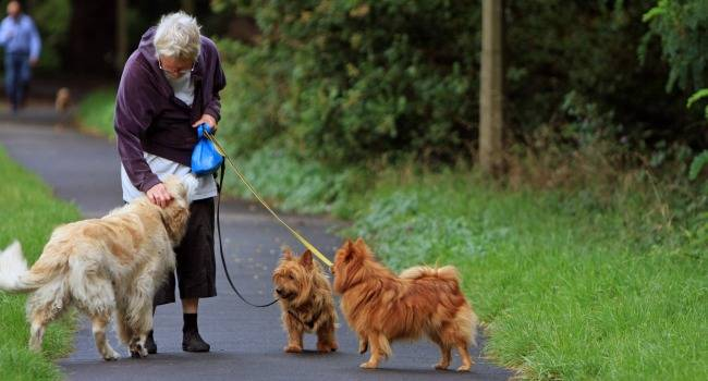 5 способов, которыми домашние животные могут принести пользу людям с ревматоидным артритом