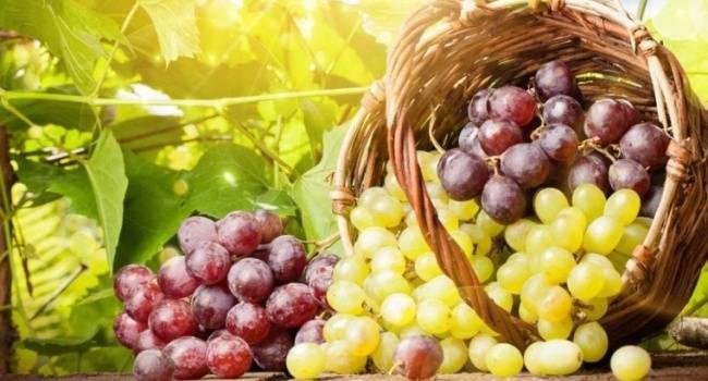 7 полезных свойств винограда