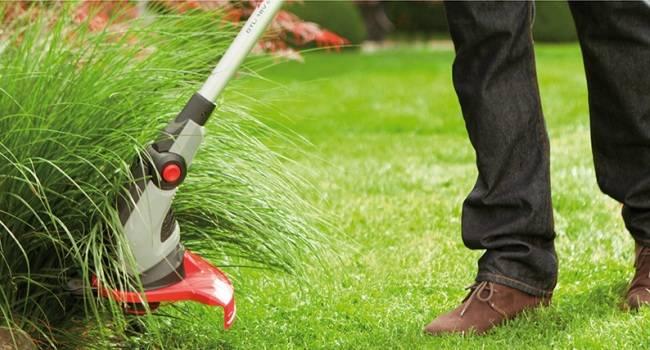 Что вам нужно знать об аллергии на траву