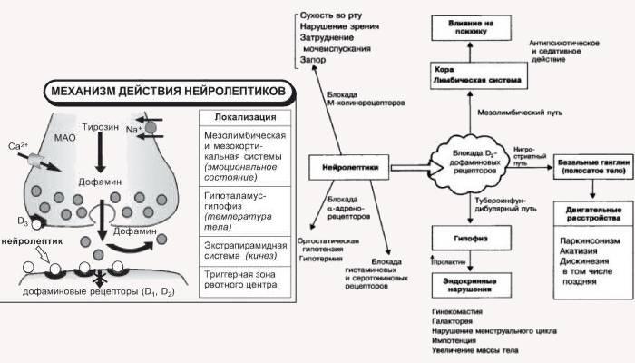 Механизм действия нейролептиков