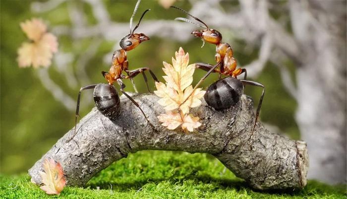 Садовые муравьи в огороде