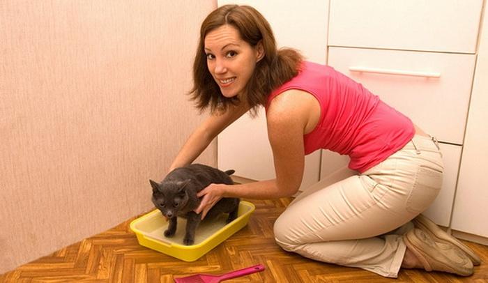 Девушка приучает кота к туалету в квартире