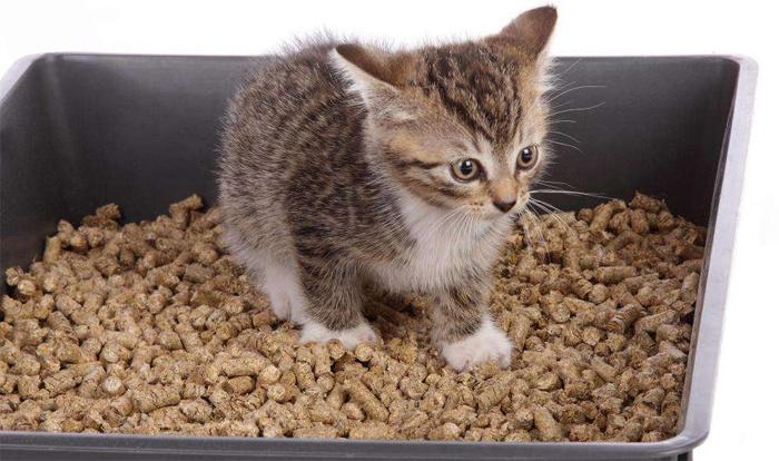 Как котенка приучить ходить в унитаз