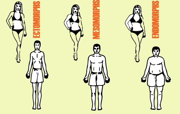 типы телосложения - нормостенический, гиперстенический и астенический