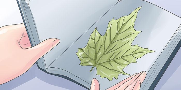 Как засушить лист для будущих поделок