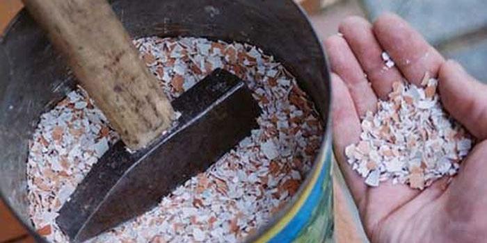 Сбор и подготовка куриных и перепелиных скорлупок для удобрения огорода
