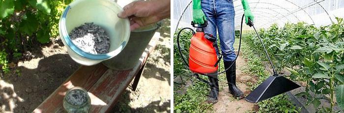 Зола с водой для обработки помидоров