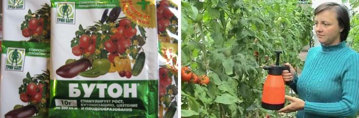 Женщина опрыскивает помидоры после дождя средством Бутон