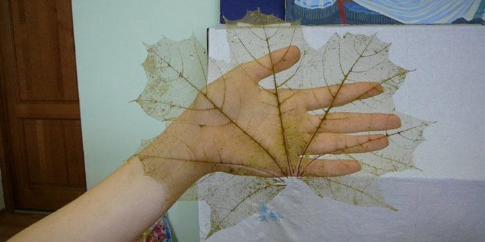 Скелетированный лист своими руками