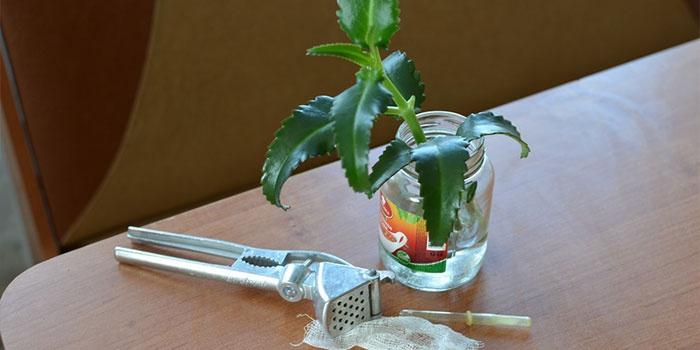Инструменты для отжима сока