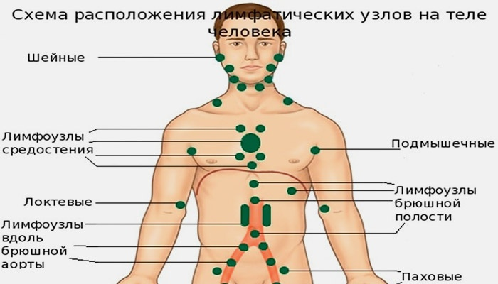 Схема расположения лимфоузлов на теле