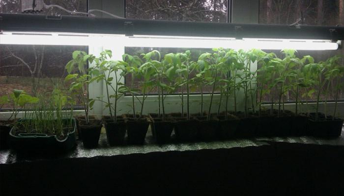 Растения под лампами