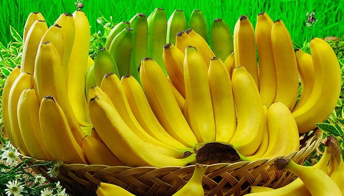 Спелые и зеленые бананы