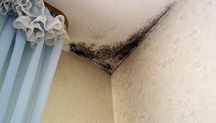 Средство от плесени и грибка на стенах в квартире: народные и покупные