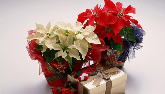 Цветы в подарочных упаковках