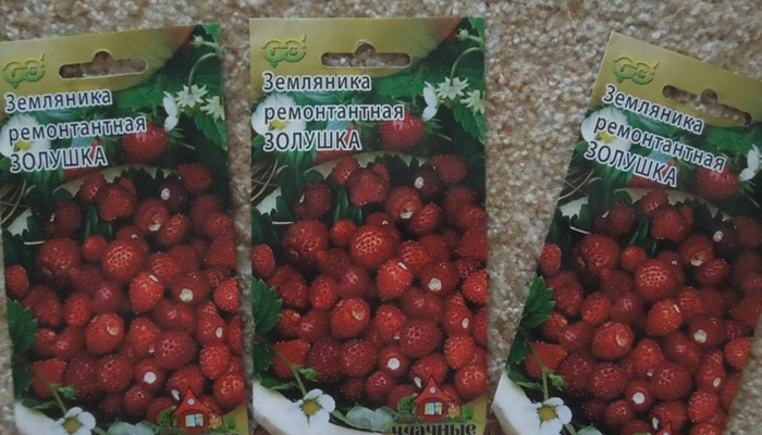Ремонтантные семена