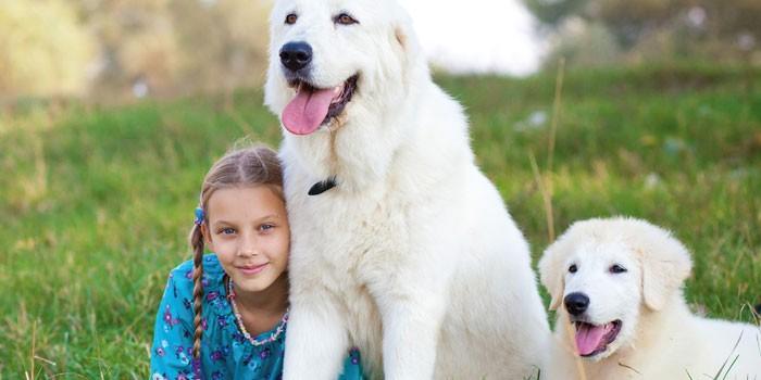 Девочка с собаками