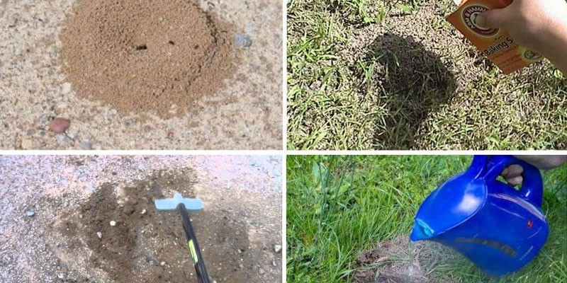 Уничтожение муравейника