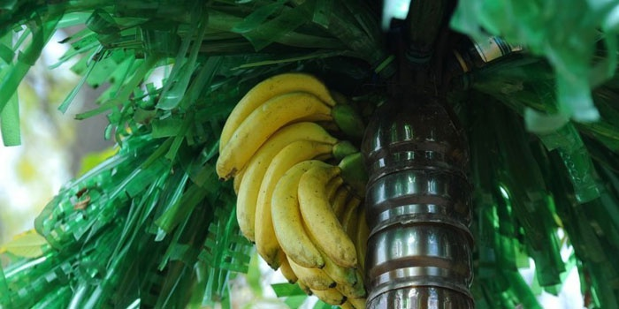 Пальма, сделанная своими руками и бананы