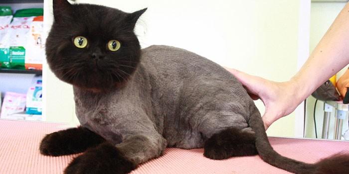 Как подстричь кота и кошку самостоятельно в домашних условиях
