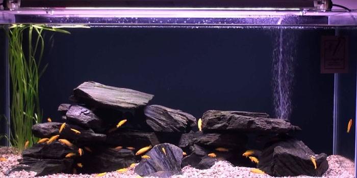Фитолампа Sylvania GRO-LUX T5 в аквариуме
