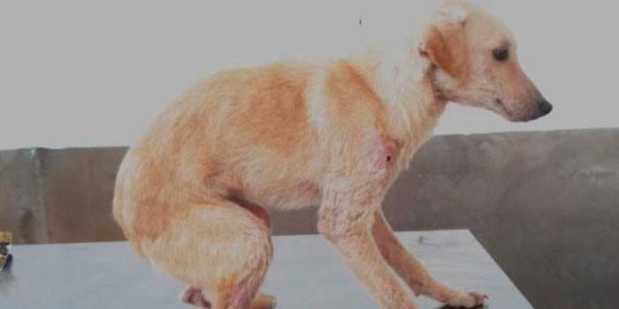 Собака в кабинете ветеринара