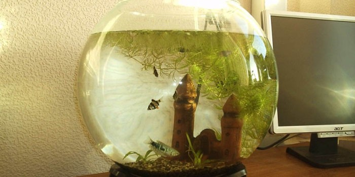 Рыбки в круглом аквариуме