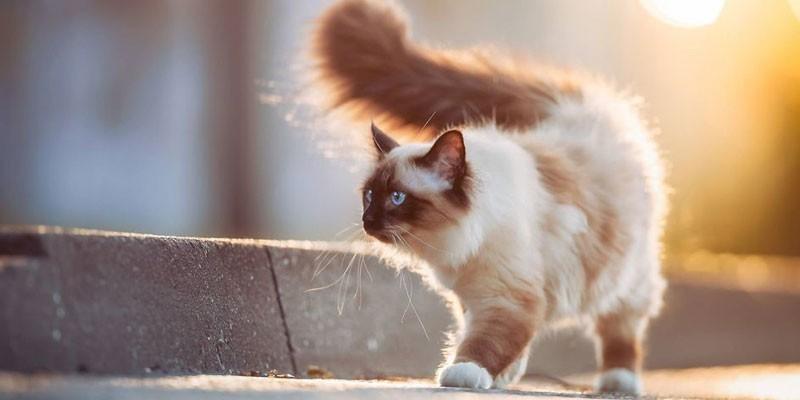 10 способов, как коты демонстрируют вам свою любовь