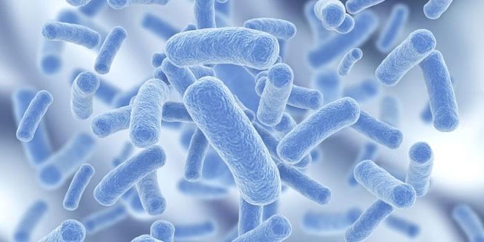 Палочки бактерий под микроскопом