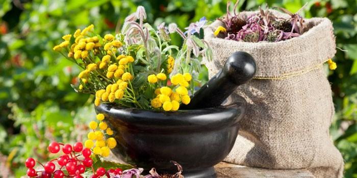 Лекарственные травы и ступка