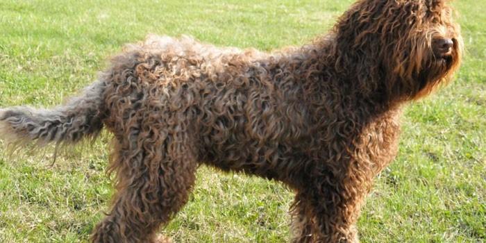 Охотничьи собаки - породы с описанием, характеристиками, названиями, стандартами и особенностями