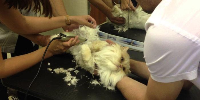 Стрижка кота машинкой в парикмахерской для животных