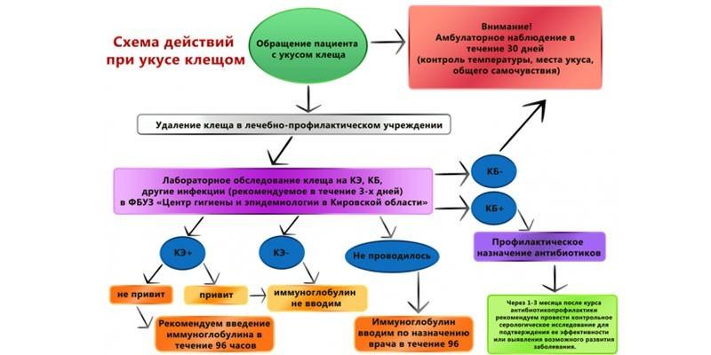 Схема действий при укусе клеща