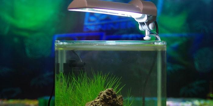 Аквариум с лампой
