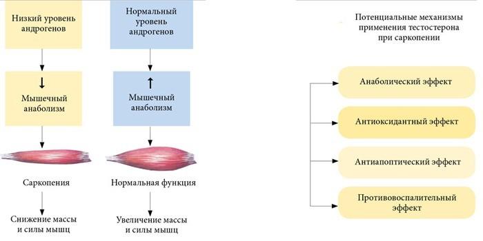 Эффект от применения тестостерона для лечения