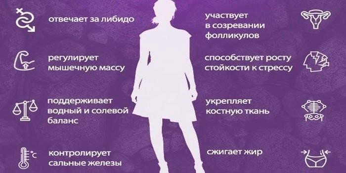 Функции тестостерона в организме женщины
