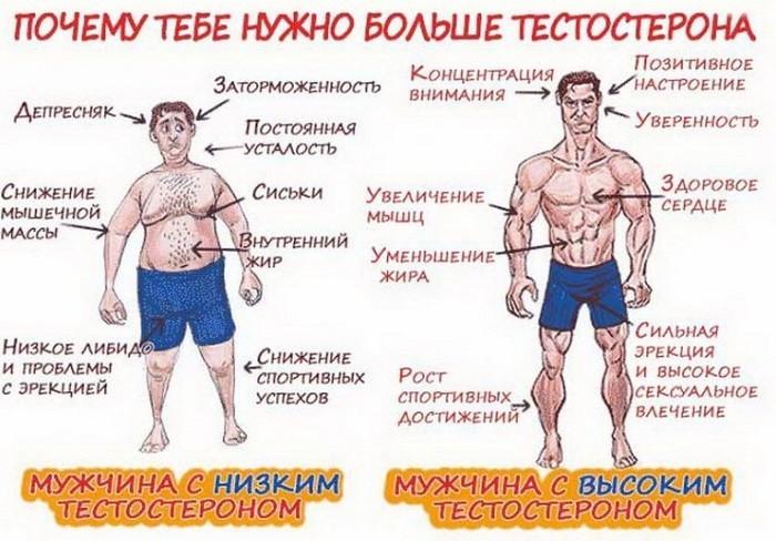 Признаки пониженного и повышенного тестостерона у мужчин