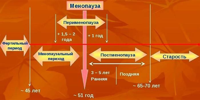 Периоды менопаузы