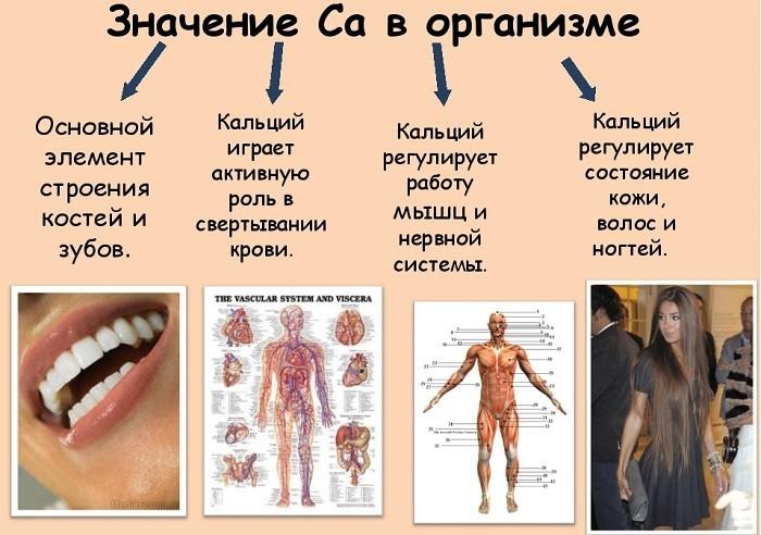 Значение кальция в организме